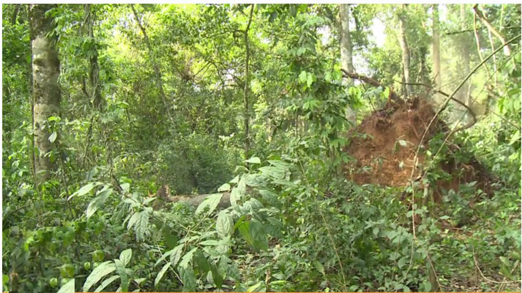 RDC: Forêt Equatoriale